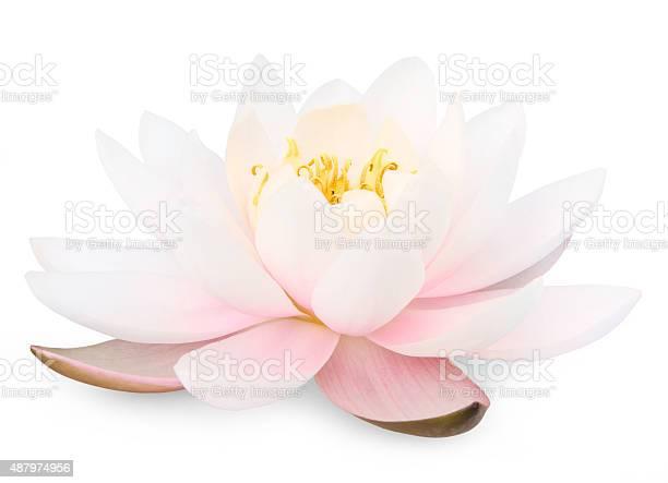 Lotus flower picture id487974956?b=1&k=6&m=487974956&s=612x612&h=xrvzb8d2wpcpzvzpjeumfwobjkvt1z 3yqsgrhf eyw=