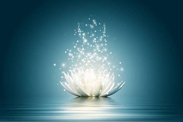 Lotus flower picture id488572005?b=1&k=6&m=488572005&s=612x612&w=0&h=aiugov0ww7hmnfcgspuabqixds3r fandtu1wq hqo4=