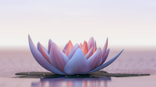 Lotus flower a lotus flower good for relaxation (3d rendering) water lily stock pictures, royalty-free photos & images