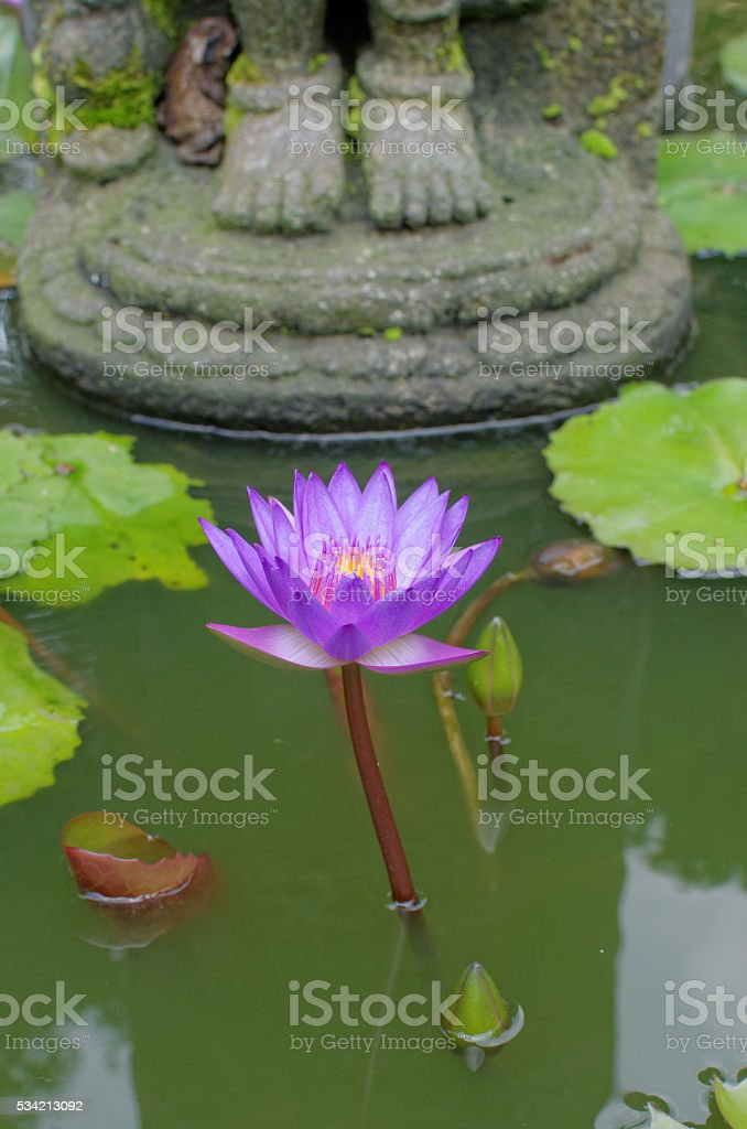 Lotus flower under buddhas feet stock photo istock lotus flower under buddhas feet royalty free stock photo mightylinksfo