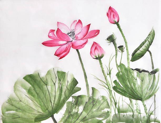 lotus blume aquarell - lotus zeichnung stock-fotos und bilder