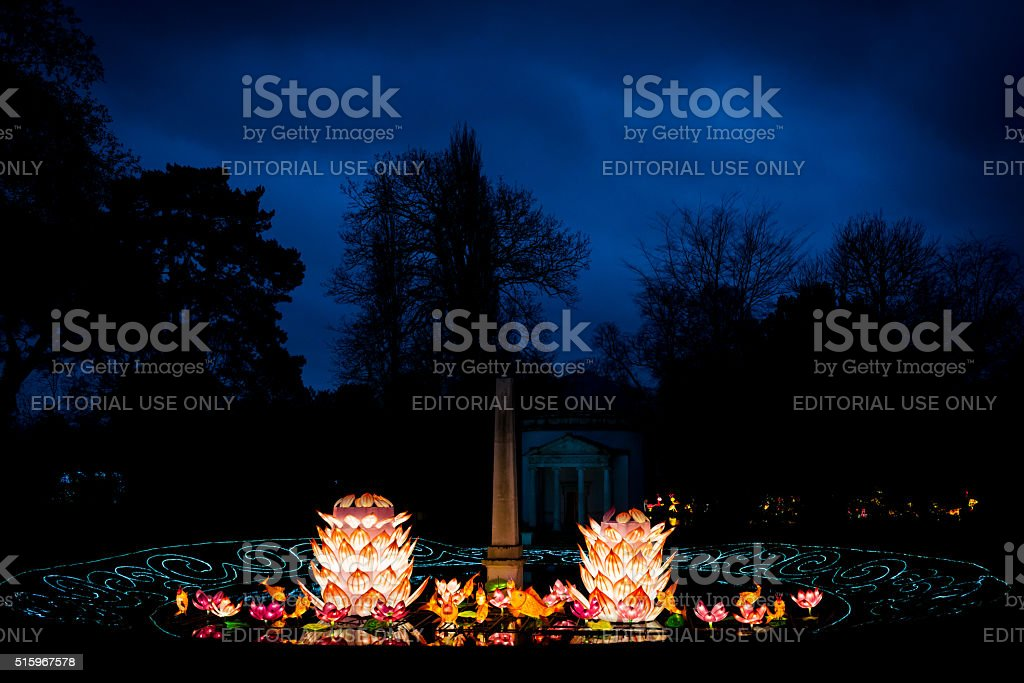 Lotus flowers and coy fish installation stock photo
