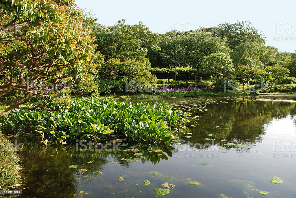 Lotus Leaves in Imperial Palace Gardens royalty-free stock photo