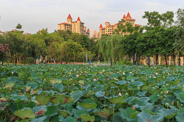 Lotus-park – Foto