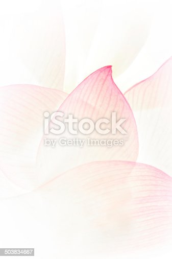 Petals of pink Lotus flower in macro,Full frame image