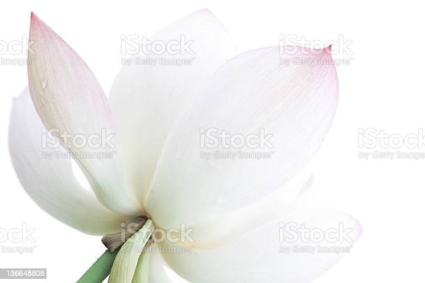 Lotus picture id136648805?b=1&k=6&m=136648805&s=612x612&h=66ah q6a akgfbr0fl1uikik7hmd4reqrzfgcmr3zta=