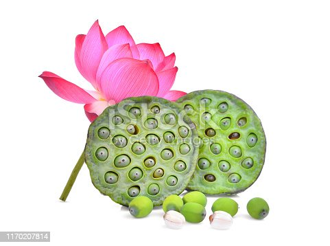 lotus pods and seeds with lotus flower isolated on white background