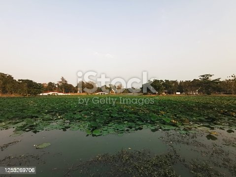 Lotus pond with clear sunset sky background by Ayutthaya historical park
