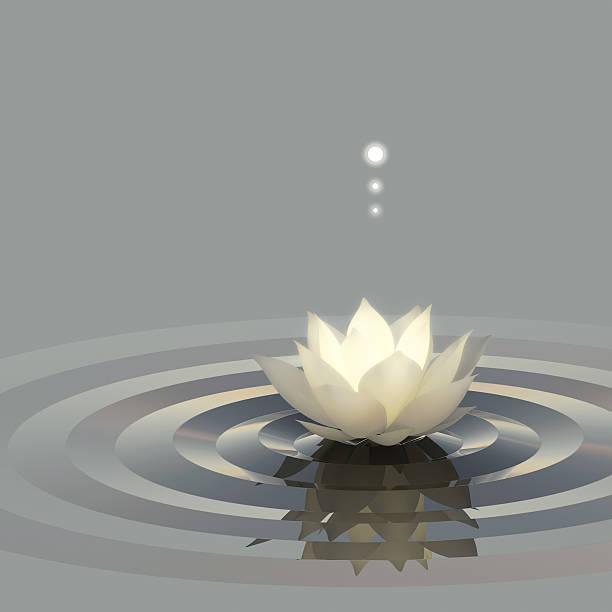 lotus water light - lotus zeichnung stock-fotos und bilder