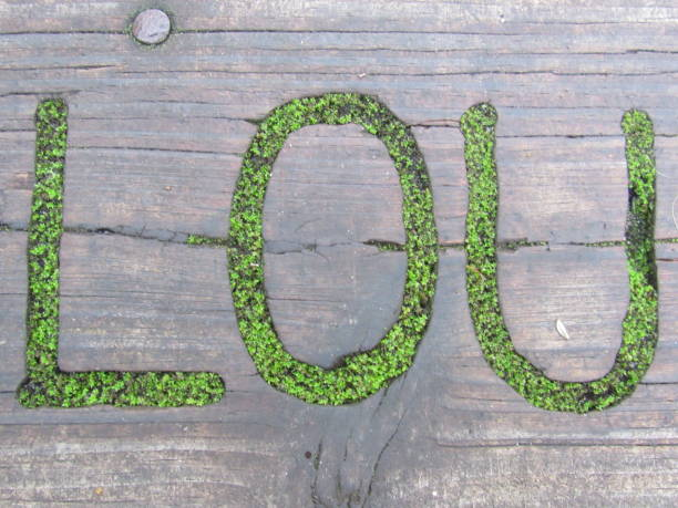 lou filled with moss - dianna dann narciso stock pictures, royalty-free photos & images