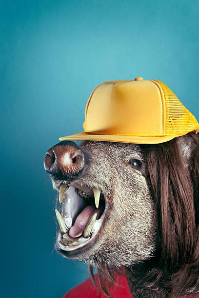 laut mouthed hinterwäldler boar head - pig ugly stock-fotos und bilder