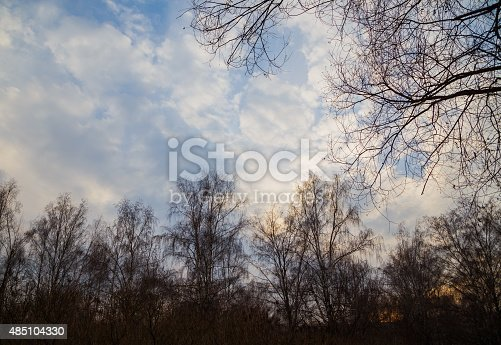 louds over tops of trees in forest spring