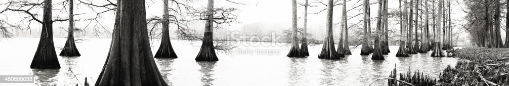 outdoor nature Lake Providence, Louisiana Bald Cypress trees in swamp area