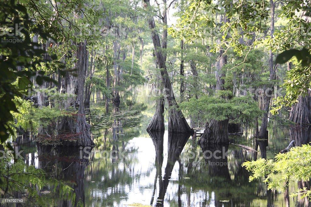 Louisiana Cypress Swamp stock photo