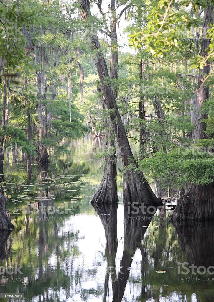 Louisiana Cypress Swamp royalty-free stock photo