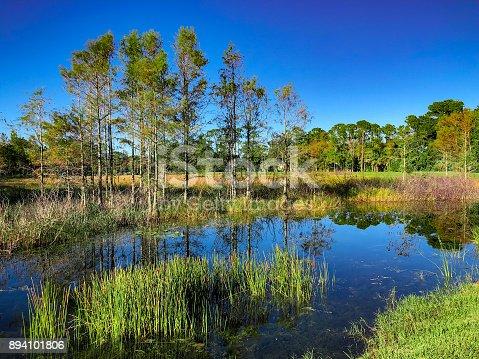 istock Louisiana Marsh pond 894101806