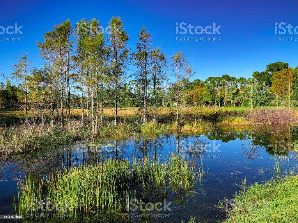 Louisiana Marsh pond stock photo