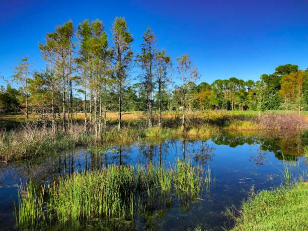 louisiana marsh pond - пруд стоковые фото и изображения