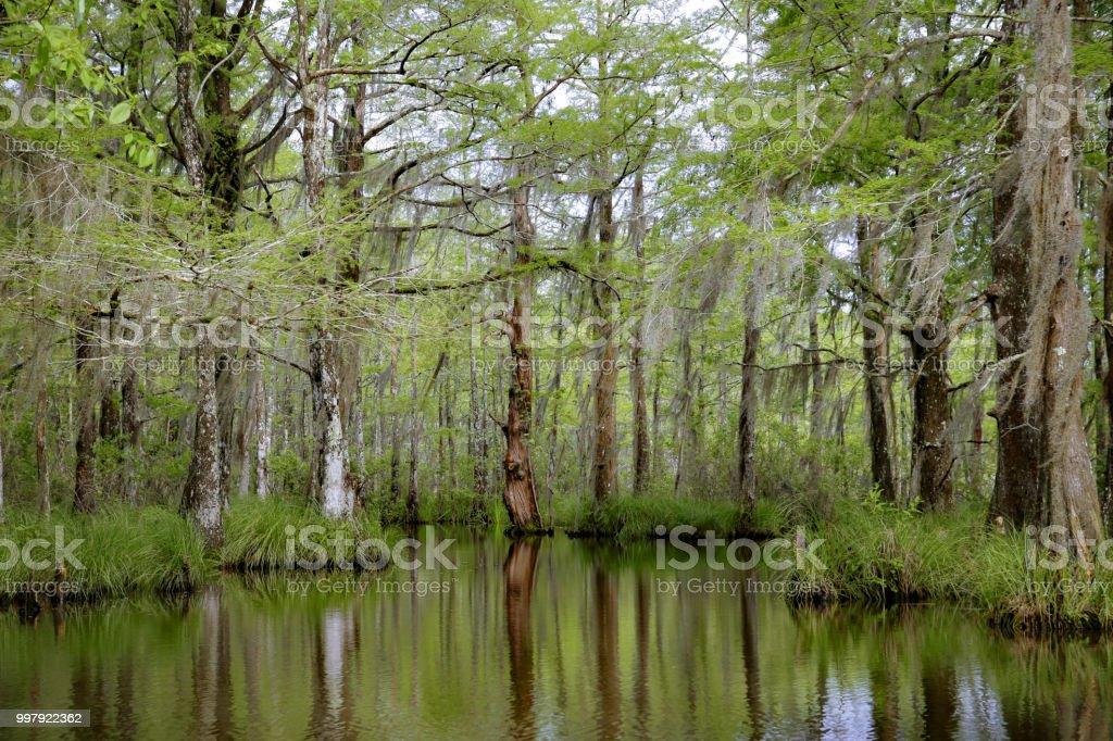 Louisiana Swamp Bayou Moss Covered Tupelo Gum, Cypress Trees, Reflection in water - Royalty-free Gulf Coast States Stock Photo