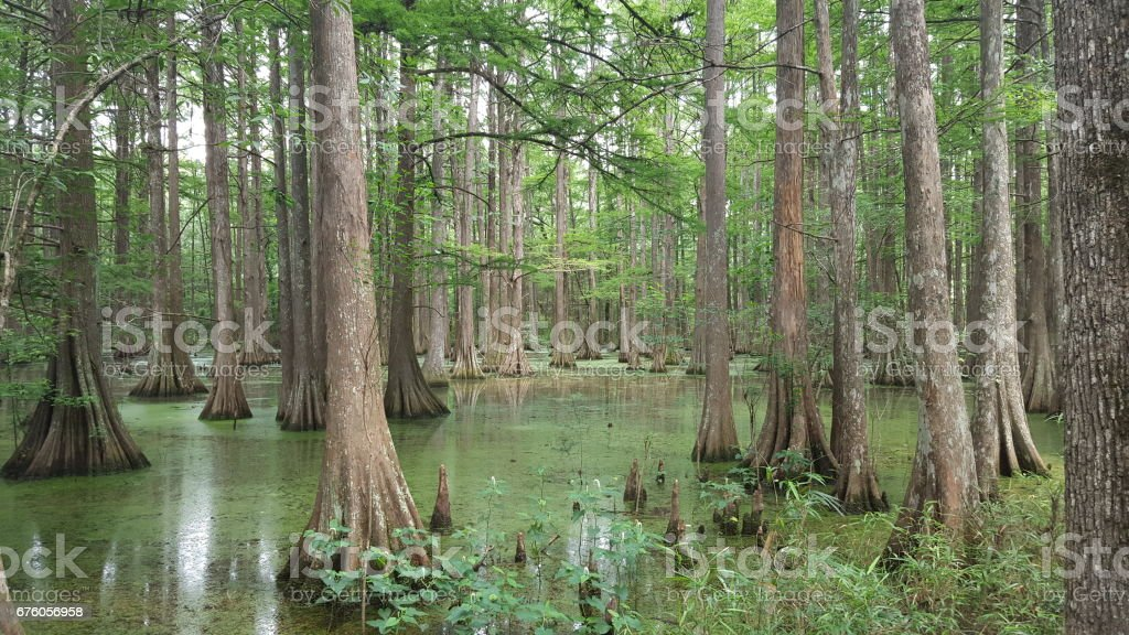 Louisiana swamp stock photo