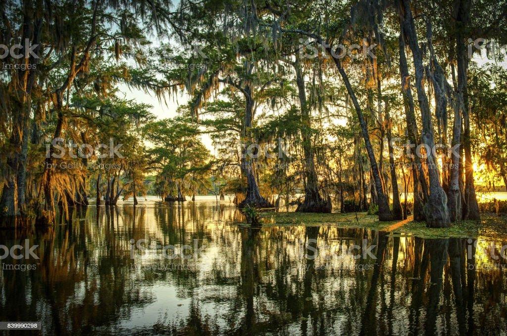 Louisiana Swamp - Zbiór zdjęć royalty-free (Bagno)