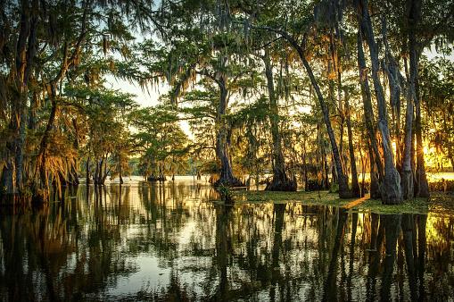 Louisiana Swamp - zdjęcia stockowe i więcej obrazów Bagno