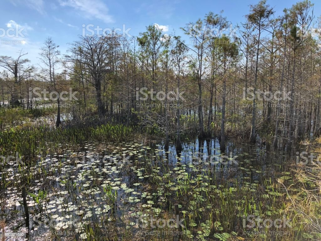 Louisiana Swamp stock photo