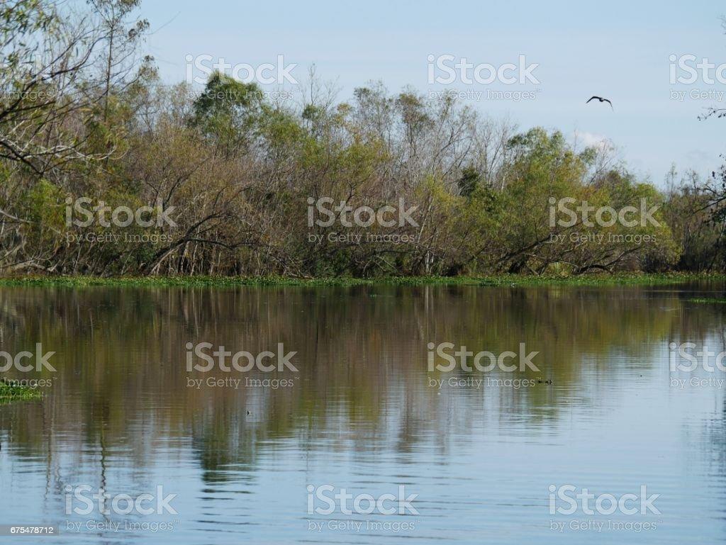 Marais de Louisiane photo libre de droits