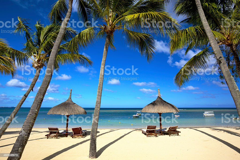Lounge chairs surrounded by palm trees on a beach stock photo
