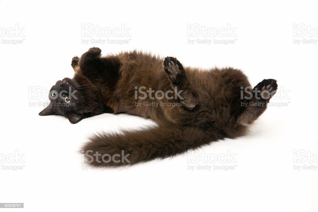 lounge puss royalty-free stock photo