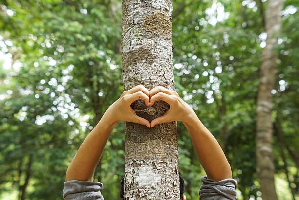 liebe und schutz der natur - liebesbaum stock-fotos und bilder