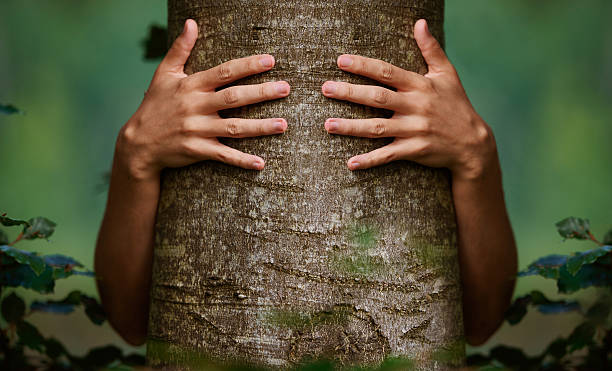 love and protect the environment front view of unrecognizable man hands embracing tree, photo taken in the forest, nature and environment protection concept. tree hugging stock pictures, royalty-free photos & images