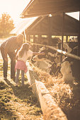 I love animals. Granddaughter and grandfather on the farm together. Close up. Copy space.