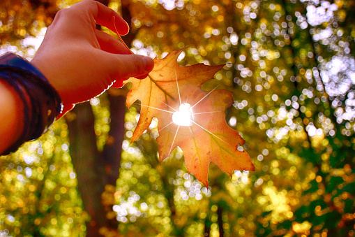 istock I love autumn. Close up shot of hand holding yellow leaf. 1051430568