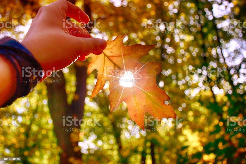 Ich liebe Herbst. Schuss von Hand mit gelben Blatt hautnah. – Foto