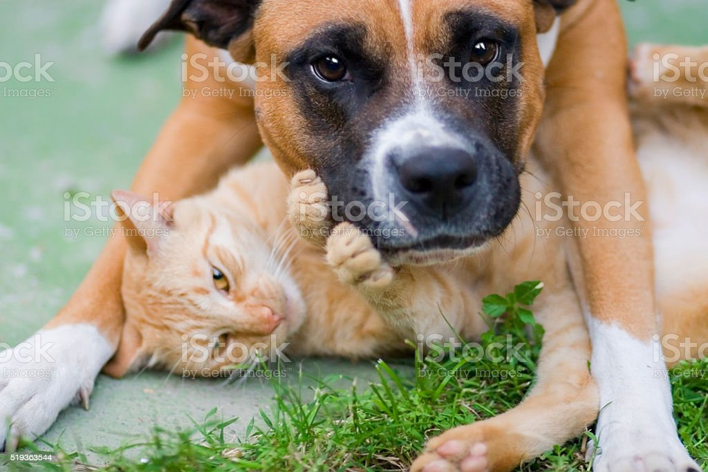 Love between cat and a dog stock photo