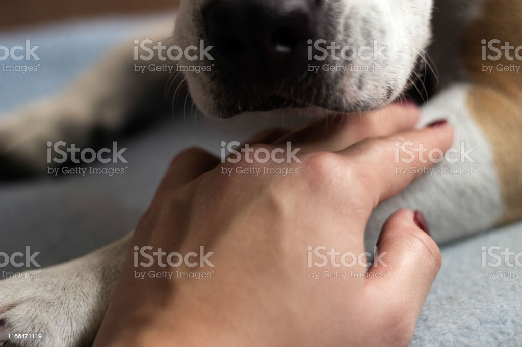 Great love between human and dog