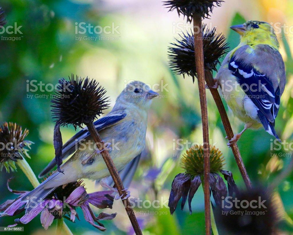 Love Birds in a Garden stock photo