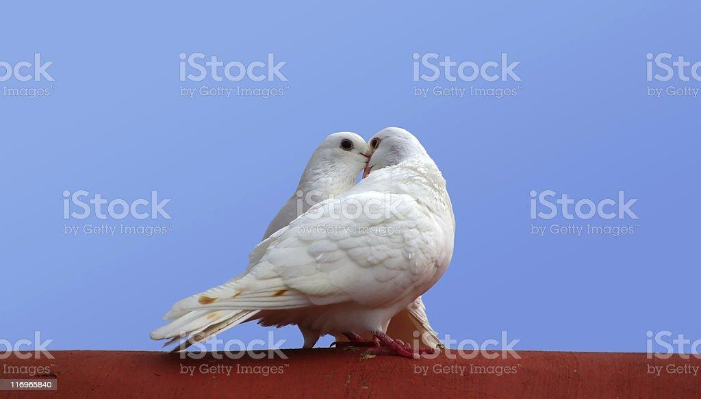 love birds royalty-free stock photo