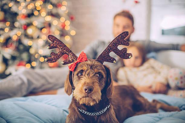 i love christmas too! - weihnachten 7 jährige stock-fotos und bilder