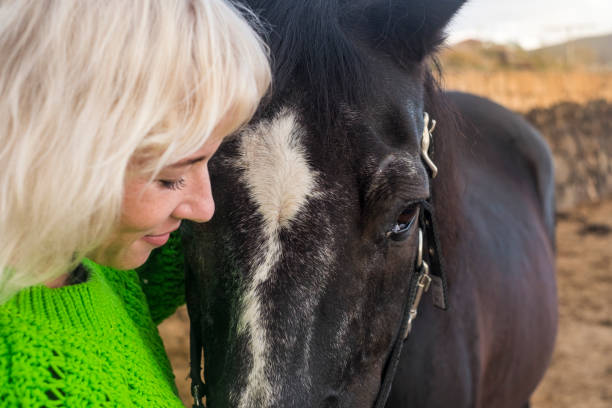 Love concept for people and animals together in happiness and friendship. beautiful blonde woman and dark horse in outdoor scenic place hugging and loving Face to face blonde attractive pretty model and beautiful amazing power black horse stay together in friendship and love. Animal therapy and alternative couple lifestyle affective stock pictures, royalty-free photos & images
