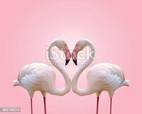 Love concept shape heart of couple flamingo on pink background