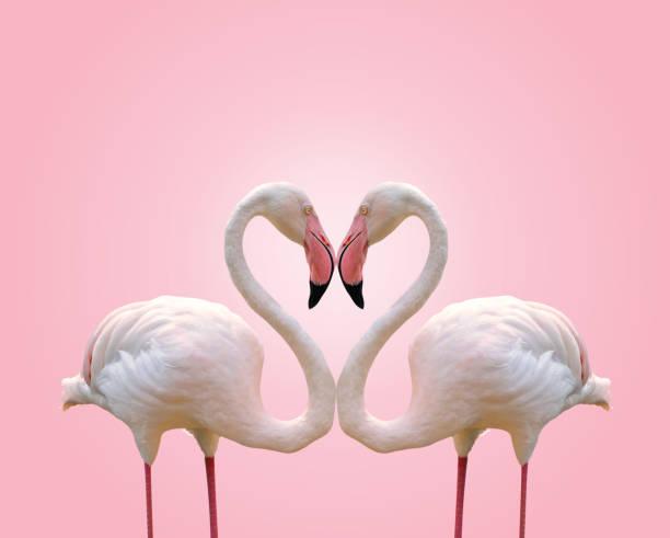 Love concept shape heart of couple flamingo on pink background picture id683185214?b=1&k=6&m=683185214&s=612x612&w=0&h=nijdah46h0zzrjl6u4id1lmafbuar16u68fcd bkgbo=