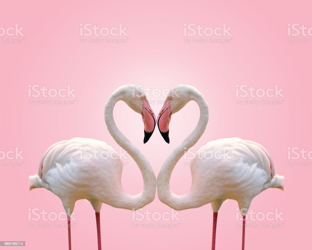 Love concept shape heart of couple flamingo on pink background - foto stock