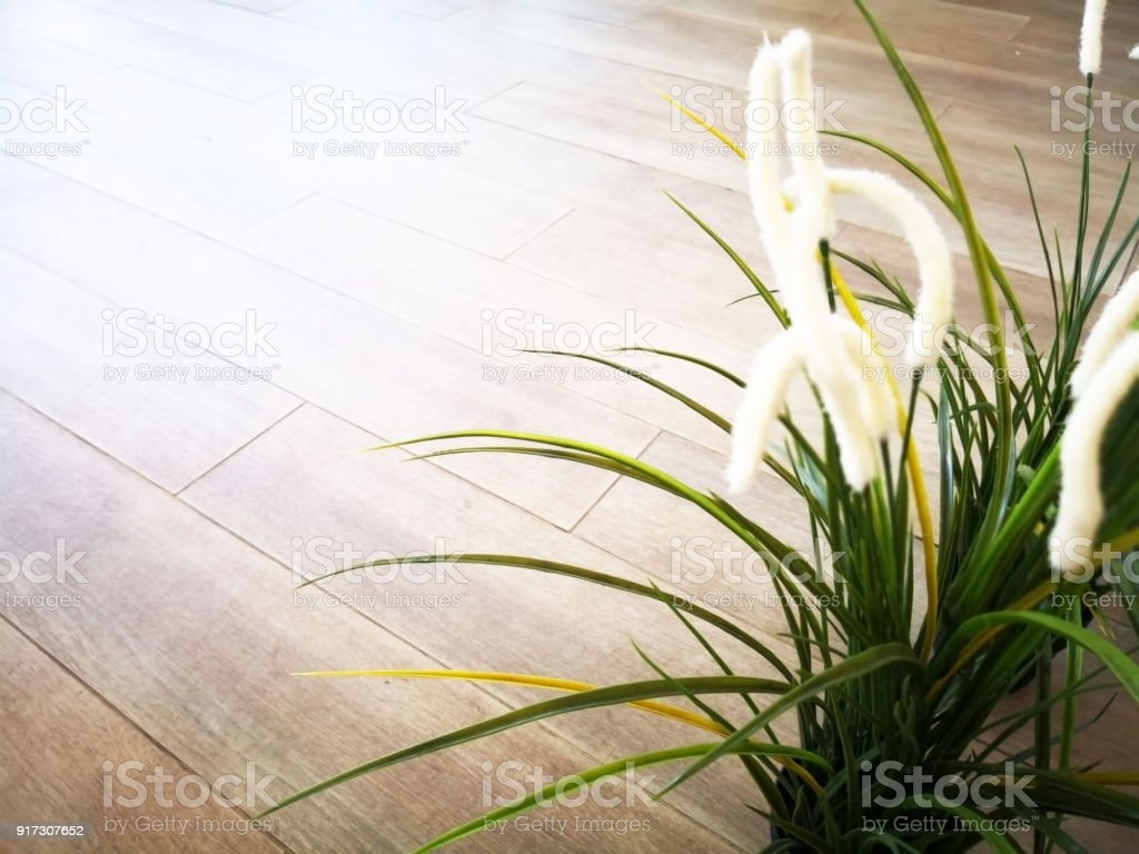 Love Concept White Flowers With Long Leaves Planted In A Pot And