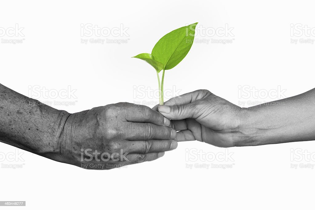 love concept:senior couple holding green plant royalty-free stock photo