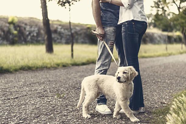 Love couple with their dog in the park picture id505082171?b=1&k=6&m=505082171&s=612x612&w=0&h=fa9wyz73ym2bnriuygbr0zj4kzkgncogyjcevnxmnvy=