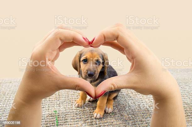 Love dogs picture id489005198?b=1&k=6&m=489005198&s=612x612&h=mxogox70xvixrhztpxuzylc9a0yyx1xn7 9w7nmiksq=