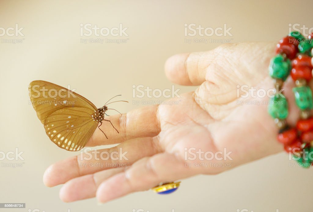 Butterfly on woman hand, Vintage color style