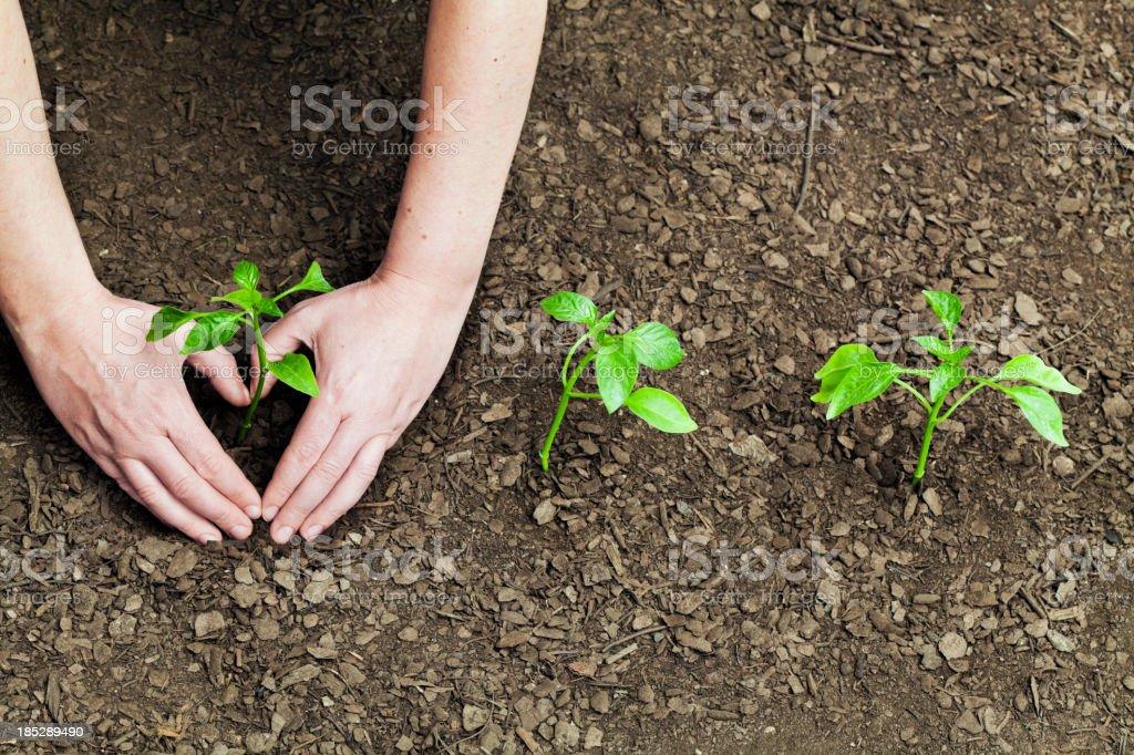 I love gardening royalty-free stock photo